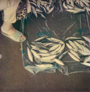 Casablanca, Marché aux poissons #30